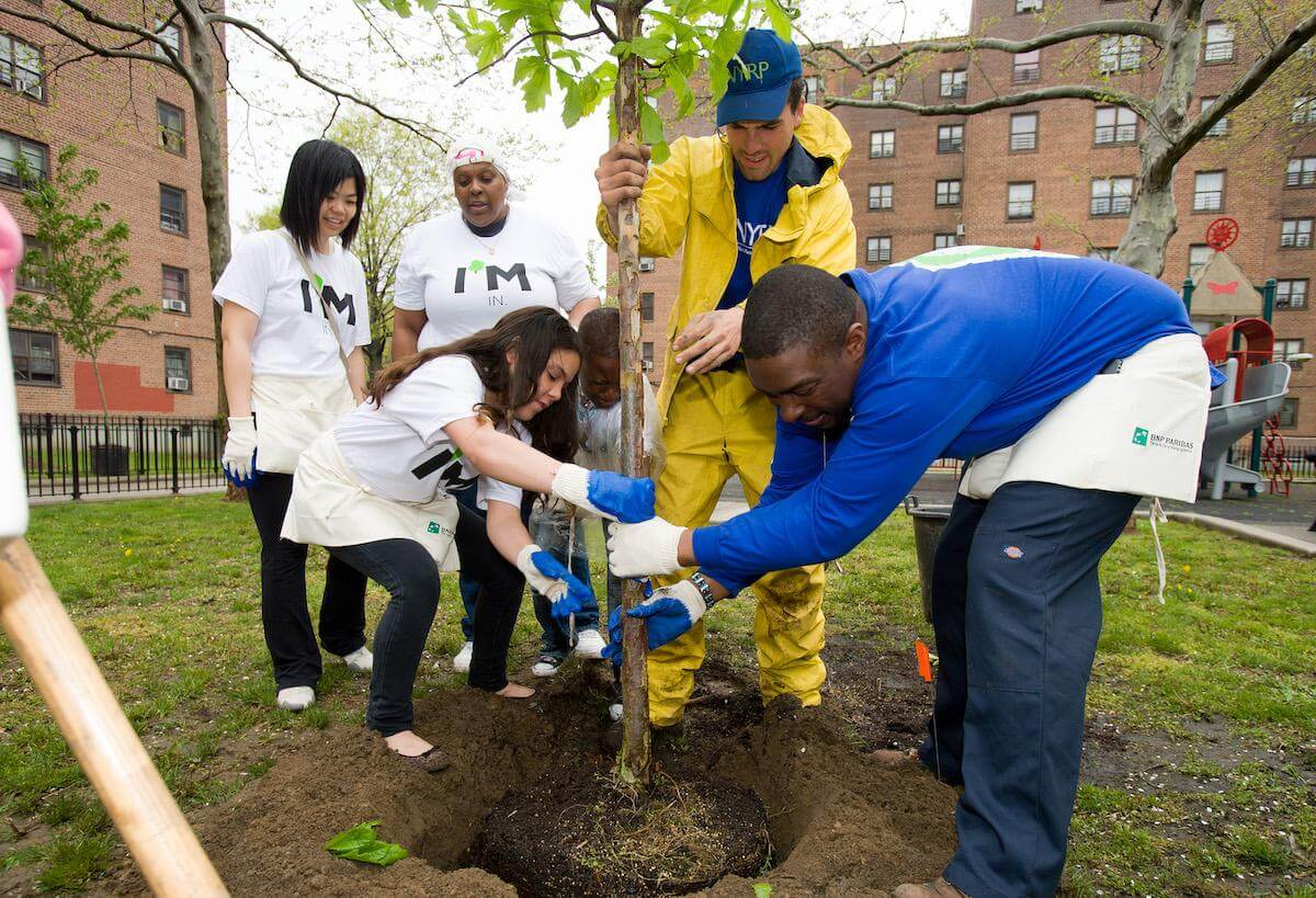 people planting tree