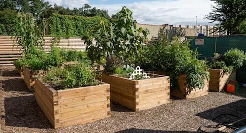 community garden