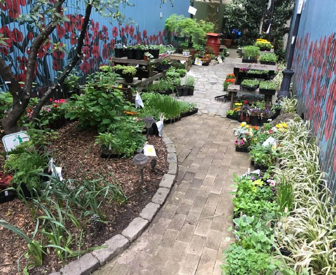 garden after restoration