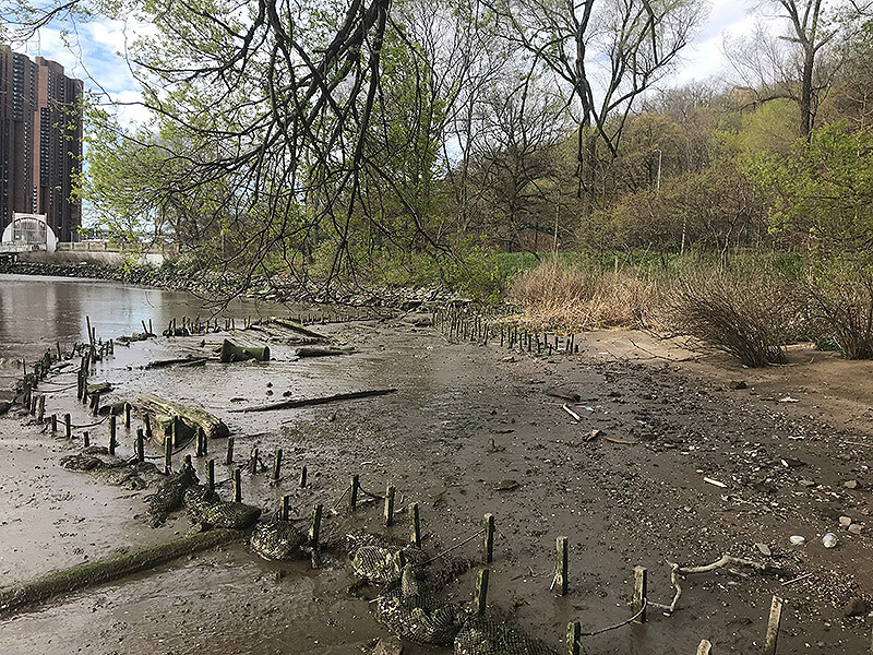 eroding shoreline on the harlem river