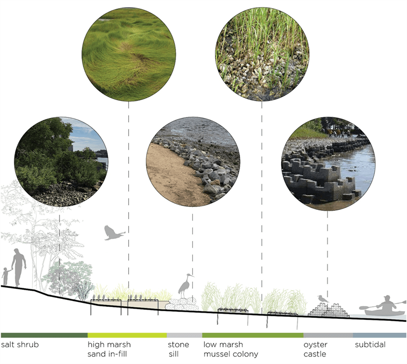a diagram of the living shoreline elements